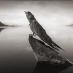 אגם נטרון