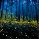 fireflies-long-exposure-photography-2016-japan-10