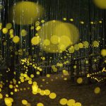 fireflies-long-exposure-photography-2016-japan-16