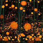 fireflies-long-exposure-photography-2016-japan-6
