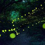 fireflies-long-exposure-photography-2016-japan-8