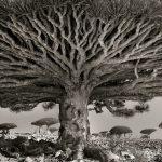 645655-1000-1458213614-ancient-trees-beth-moon-8