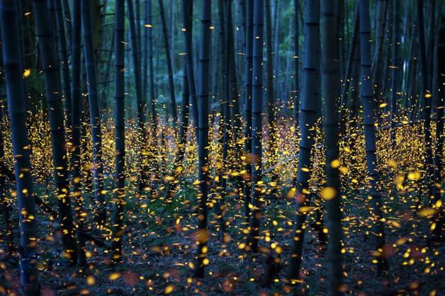 גחליליות ביער ביפן