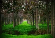 4) צילום נוף